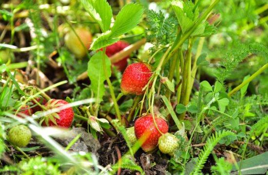 sentiero dei frutti di bosco -08