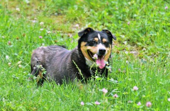 streichelzoo-hund