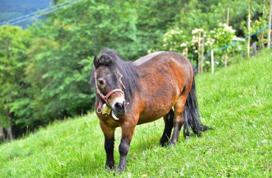 streichelzoo-pony-01