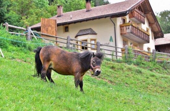 Pony am Bauernhof